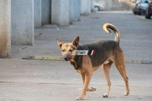 كلب مسعور يعقر 36 شخص بالإسكندرية