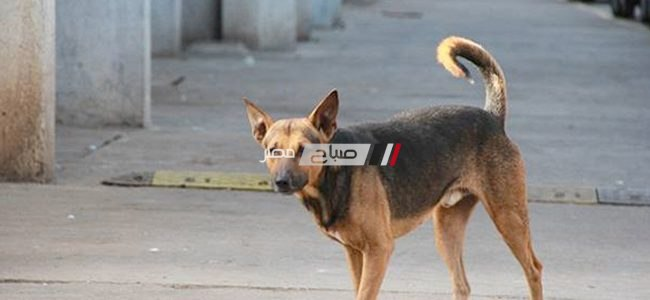 إصابة طفل عقره كلب ضال اثناء عودته لمنزله في دمياط