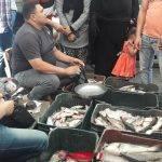 ننشر كافة أسعار الأسماك اليوم الخميس 17-10-2019 في الأسواق المصرية