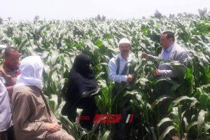 وكيل الزراعة بدمياط يشدد على متابعه الزراعات الصيفية ويتفقد زراعات الذرة