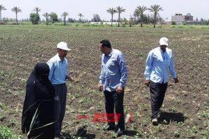 وكيل الزراعة بدمياط يتفقد زراعات الخضار ويتابع اعمال مشروع ترشيد استهلاك مياة الرى
