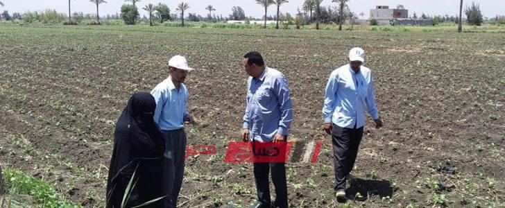 وكيل الزراعة بدمياط يتفقد زراعات القطن والأرز بالتوفيقية