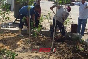 رئيس محلية كفر البطيخ: رفع كفاءة شارع رفعت المحجوب ودهان البلادورات وزراعة الاشجار