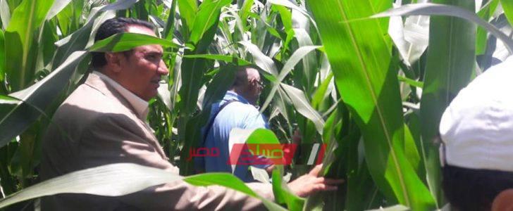 وكيل الزراعة: لا تعديات على الزمام الزراعي بدمياط خلال اجازة عيد الاضحى المبارك