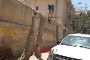 مستشفى عام تقطع الأشجار حول السور بحي العامرية في الإسكندرية