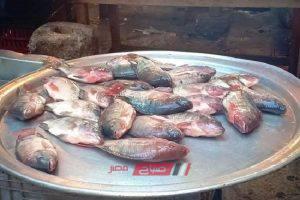 أسعار الأسماك اليوم الأحد 1-3-2020 في الإسكندرية