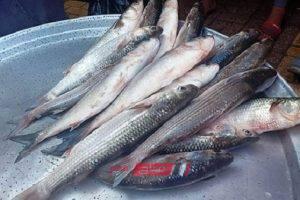 أسعار الأسماك اليوم الأربعاء 4-3-2020 في محافظة الإسكندرية