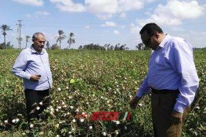 وكيل الزراعة بدمياط يتفقد زراعات القطن بالوسطاني