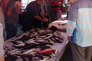 أسعار الأسماك اليوم الخميس 27-2-2020 في محافظة الإسكندرية