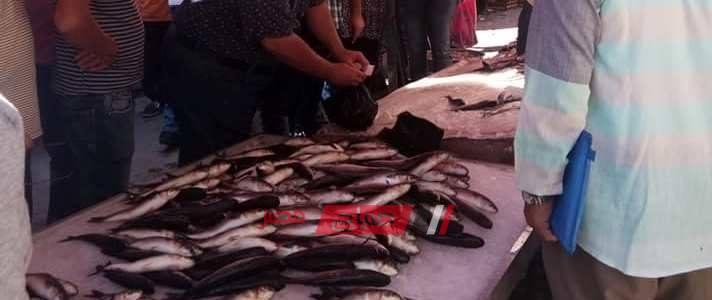 أحدث أسعار الأسماك اليوم الجمعة 14-2-2020 في الأسواق المصرية
