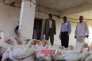 وكيل الزراعة بدمياط يتفقد مزرعة الإنتاج الداجني بعزب العرب