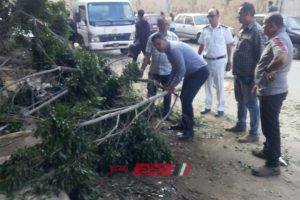 طقس الاسكندرية الان.. عاصفة هوائية ورياح شديدة تتسبب في سقوط شجرة.. صور