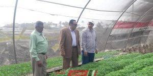 وكيل الزراعة بدمياط يتفقد زراعات الصوب بكفر البطيخ