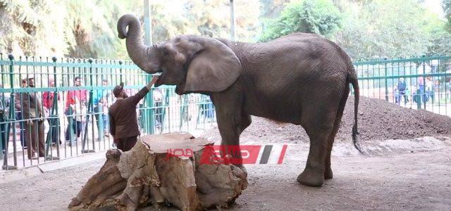 بعد وفاة آخر الفيلة.. حديقة حيوان الجيزة خالية من الأفيال