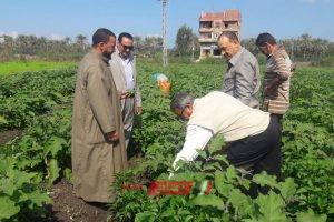 وكيل الزراعة بدمياط يتفقد زراعات البطاطس والكرنب بمركز كفر البطيخ