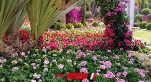 شاهد.. وزارة الزراعة تفتتح أول معرض لزهور الخريف