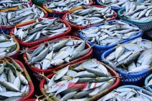 تباين أسعار الأسماك في سوق العبور اليوم