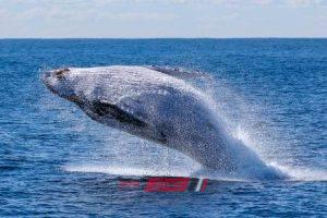 تعرف على حقيقة صوت الحوت الأزرق فى مصر وليبيا فيديو