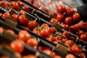 ننشر أسعار الطماطم في أسواق الخضراوات اليوم