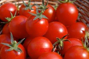 سعر الطماطم يتراجع 5 قروش في سوق الجملة اليوم
