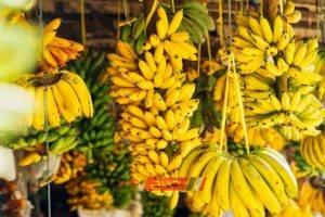استقرار أسعار الموز في سوق الجملة اليوم