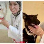 مصر خالية من السُعار حملة سمر عبدالرحمن لتطعيم الكلاب والقطط الضالة