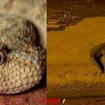 بعد ظهور تمساح أكتوبر – حيوانات تثير رعب المواطنين في الشوارع