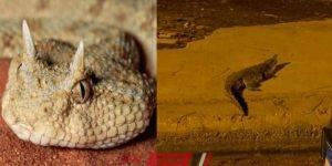 بعد ظهور تمساح أكتوبر - حيوانات تثير رعب المواطنين في الشوارع