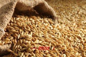 القمح يسجل 40 جنيهًا للكيلو في المنوفية