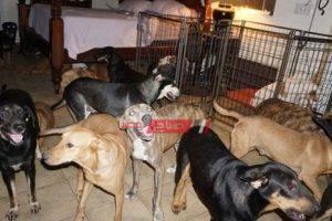 دمياط تستعد لقتل 100 كلب ضال بالسم بعد حوادث عقر المواطنين والأطفال