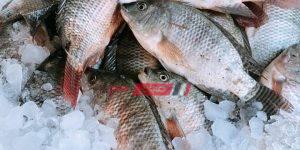أسعار الأسماك اليوم