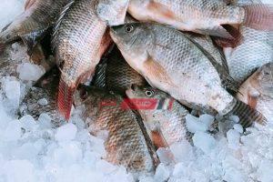 كيلو كاليماري بـ 160 جنيهًا في سوق العبور لجملة الأسماك