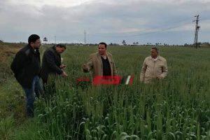 وكيل الزراعة بدمياط يتفقد زراعات القمح بكفر سعد في جوله مفاجئه