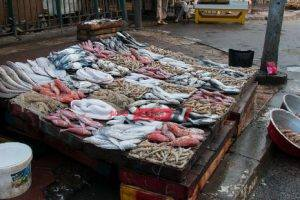 استقرار أسعار السمك البلطي وارتفاع الجمبري في سوق الجملة