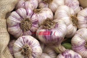 ننشر أسعار الثوم في أسواق محافظات مصر اليوم
