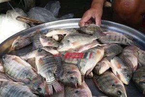 تعرف على أسعار السمك البلطي في المحافظات اليوم