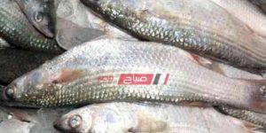السمك الماكريل