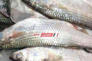 طريقة عمل صينية سمك الماكريل في الفرن