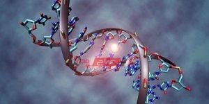 كيف أثرت تكنولوجيا الهندسة الوراثية في الثورة البشرية العلمية
